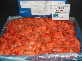 Borealis Shrimp
